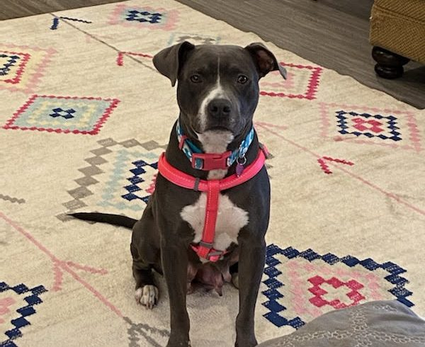 Wine (ADOPTED!!!)